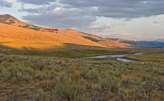 Lamar Valley, Yellowstone National Park, WY